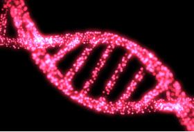 BREAST CANCER: SCIENTISTS DISCOVER TWO NEW GENETIC RISK FACTORS - Bimedis - 1